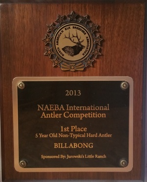 NAEBA International Antler Competition - 2013 Winner