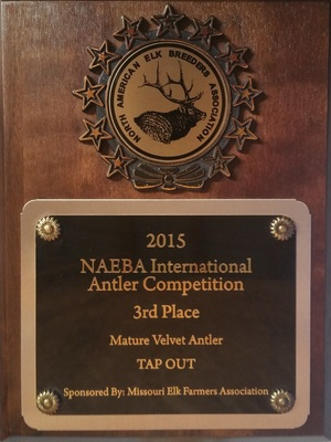 NAEBA International Antler Competition - 2015 Winner